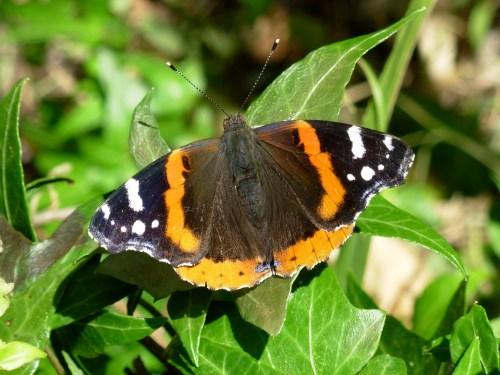summerbutterfly