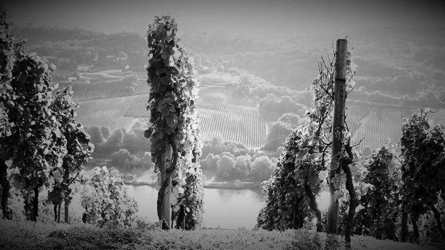 Barrique –  Luxemburger Wein in Luxemburger Eiche