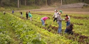 Reducing Waste Relieving Hunger: Gleaning at Bloomfield Organics
