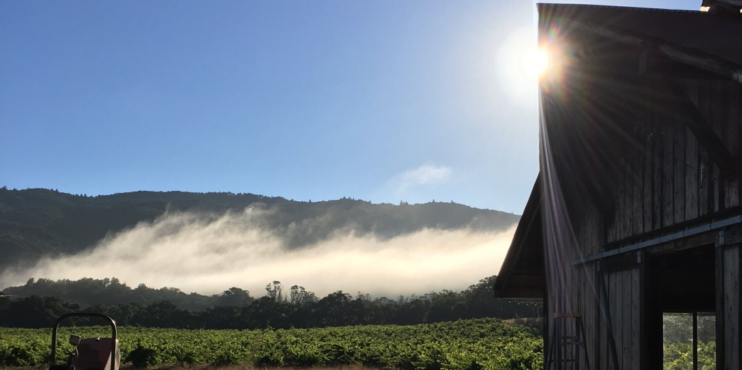 Bucklin's Old Hill Ranch Vineyard with fog lifting