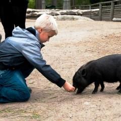 Photos: Day Trip to Kolmården Animal Park
