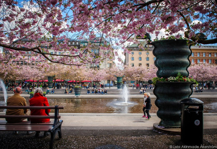 2015_CherryBlossoms_018