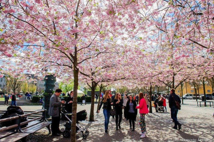 2015_CherryBlossoms_025