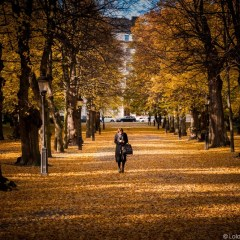 Photos: Autumn in Stockholm 2015