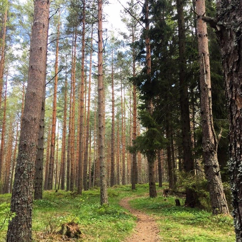 orienteering in stockholm forest