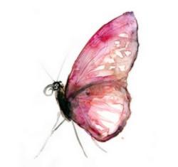 papilon