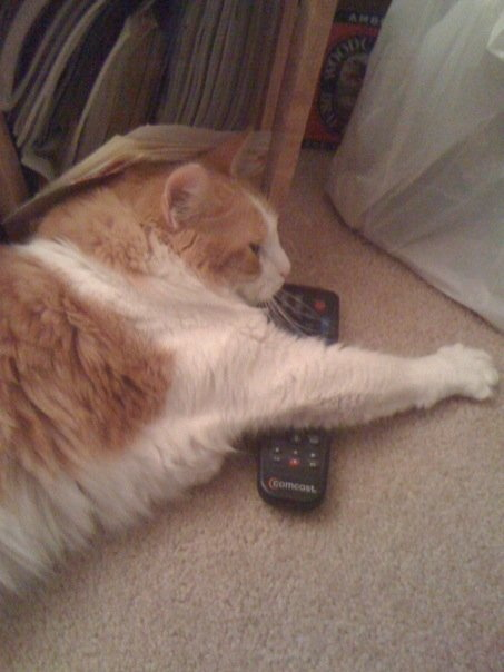 Every home has a remote hog, usually male