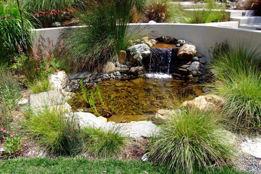 Backyard Ponds Dummies