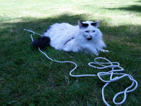 Mozzie in the grass, clothesline leash around him