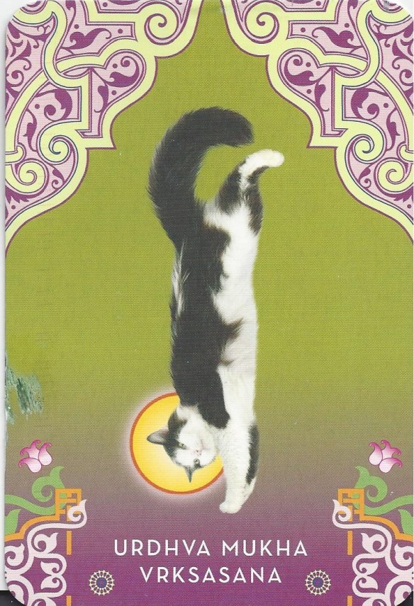 Cat In a Yoga Pose Postcard