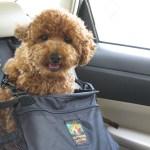 Winnie car seat.jpg