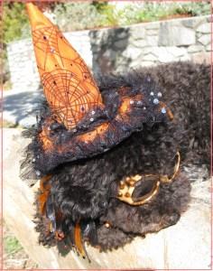 Small Poodle at Large | Harper B. | Dog Blog