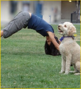 "Calla is a canine yoga teacher who specializes in Downward Dog. ""It's important to carefully supervise humans as they learn this pose,"" notes Calla. ""As you can see, my current client needs further coaching. It would help if she had a tail."""