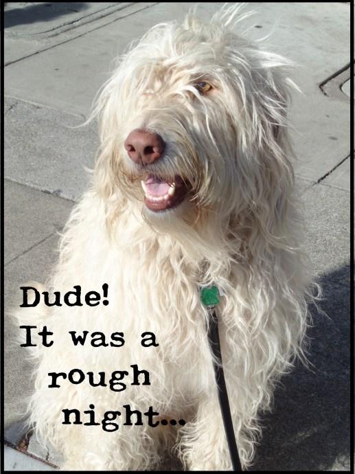 dude secret bark