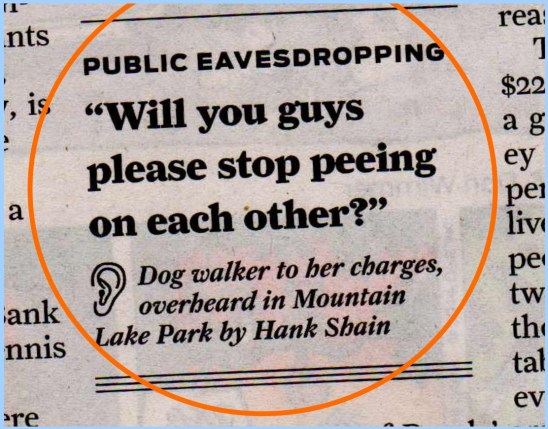 Dogs! Please Stop!