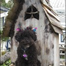 """I was very pleased to see Poodle Day includes a counterculture contingent. I just love the diversity of poodle-ness."""