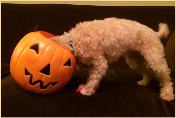 ruby halloween pic
