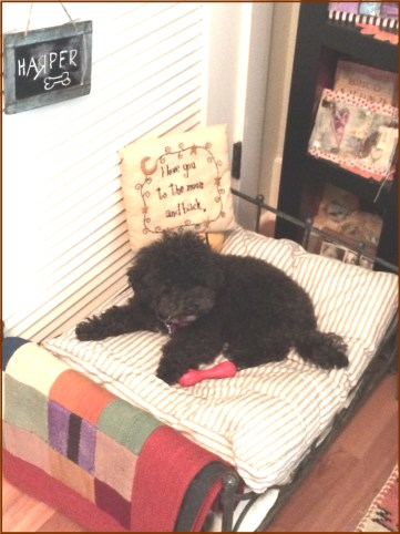Small Poodle at Large | Harper B. | A Bed of One's Own
