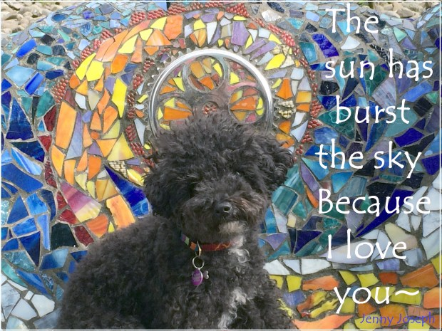 Harper B. | Small Poodle at Large | The Sun has Burst the Sky