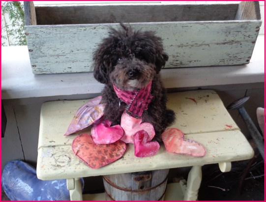 Harper Small-Poodle-at-Large Valentine 2