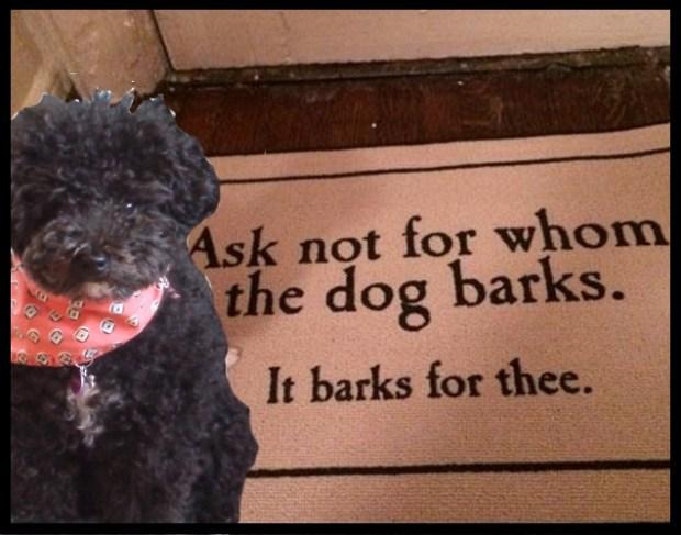 Harper B. Small Poodle at Largeks