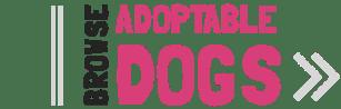 Adopt a Pet Small Dog Rhode Island
