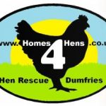 Rehome Ex Battery Hens in Scotland