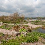 Win 2 Tickets to Jekka McVicar's Talk At Yeo Valley Organic Gardens