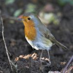 Giving wildlife a helping hand in cold weather