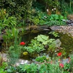 Pondering a pond