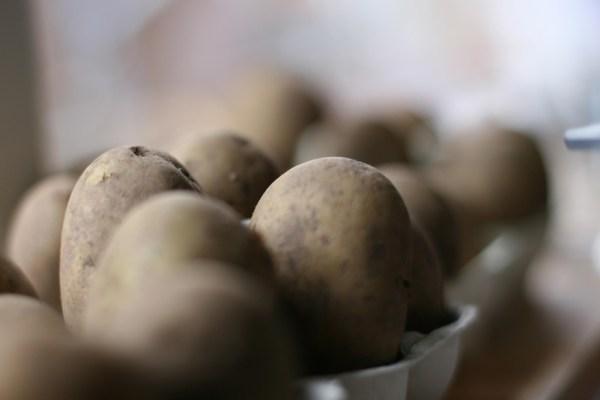 Chitting Potatoes on windowsill