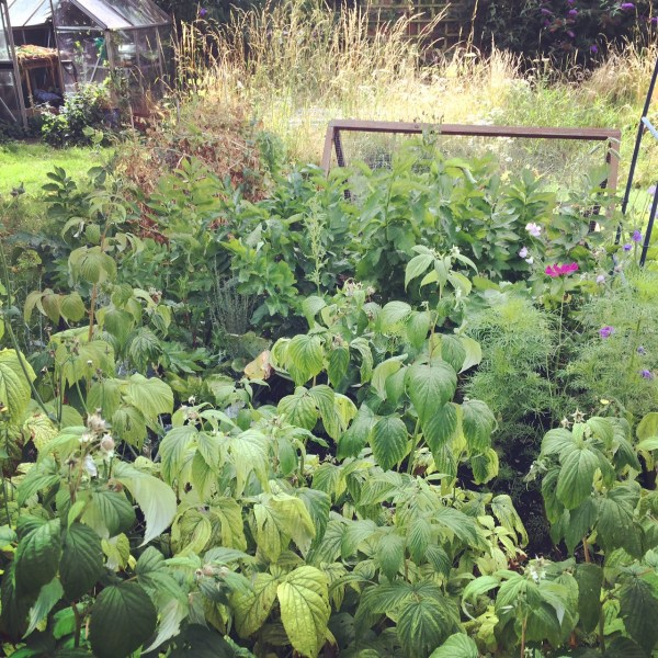 Large veg patch