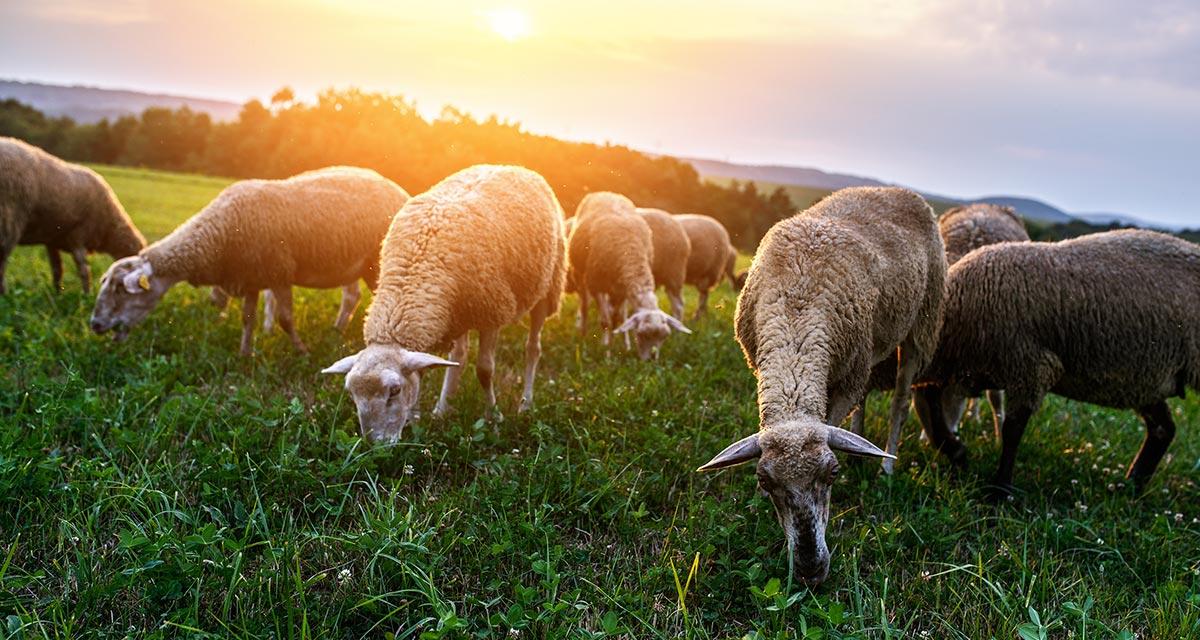 Pasture renovation basics