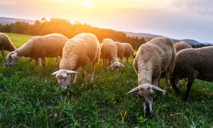 Pasture renovation basics