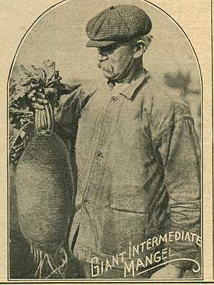 Mangel beet seed ad from 1919