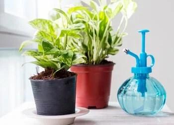 houseplants on a table
