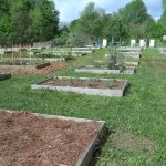 Rows of raised beds, bounded with boards, in a community garden.