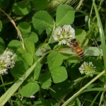 Small Yards Can Support a Lot of Pollinators