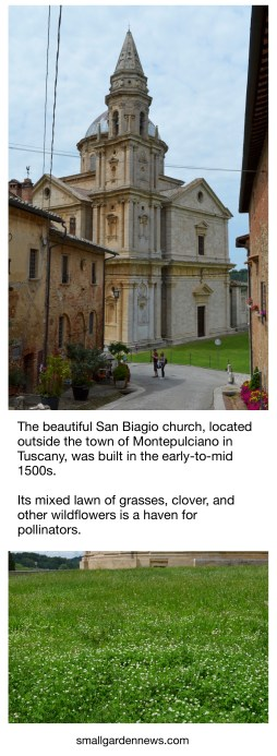 Flower-filled lawn of the San Biagio church in Tuscany is a haven for pollinators.