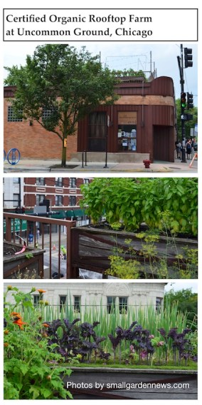 Uncommon Ground restaurant and rooftop farm grows crops vertically, everywhere it can.