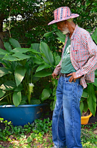 Man in jeans, a red and blue plaid shirt, and red and blue striped hat, pulls aside large green leaves of  turmeric plant to show the white flower spike coming up behind the leaves.