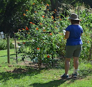 A woman in blue shirt, shorts and a hat, with a clipboard, observing a patch of flowers.