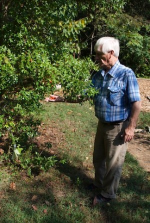 Older, white-haired man in blue and white plaid shirt facing a tree to the left, and holding three small orange-colored fruits in his open palm.