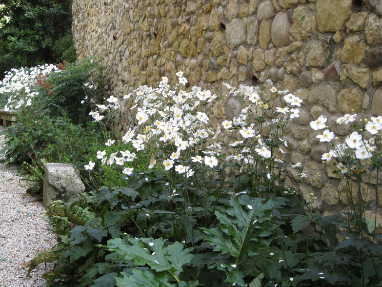 (above) Japanese Anemones within the gardens of Villa Giusti (Giardini Giusti) in Verona, northern Italy.