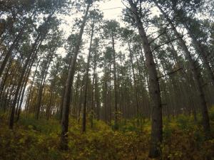 Tree Farm in Central Wisconsin