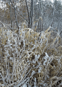 Frost at Little Round Lake in Burnett County, Wisconsin