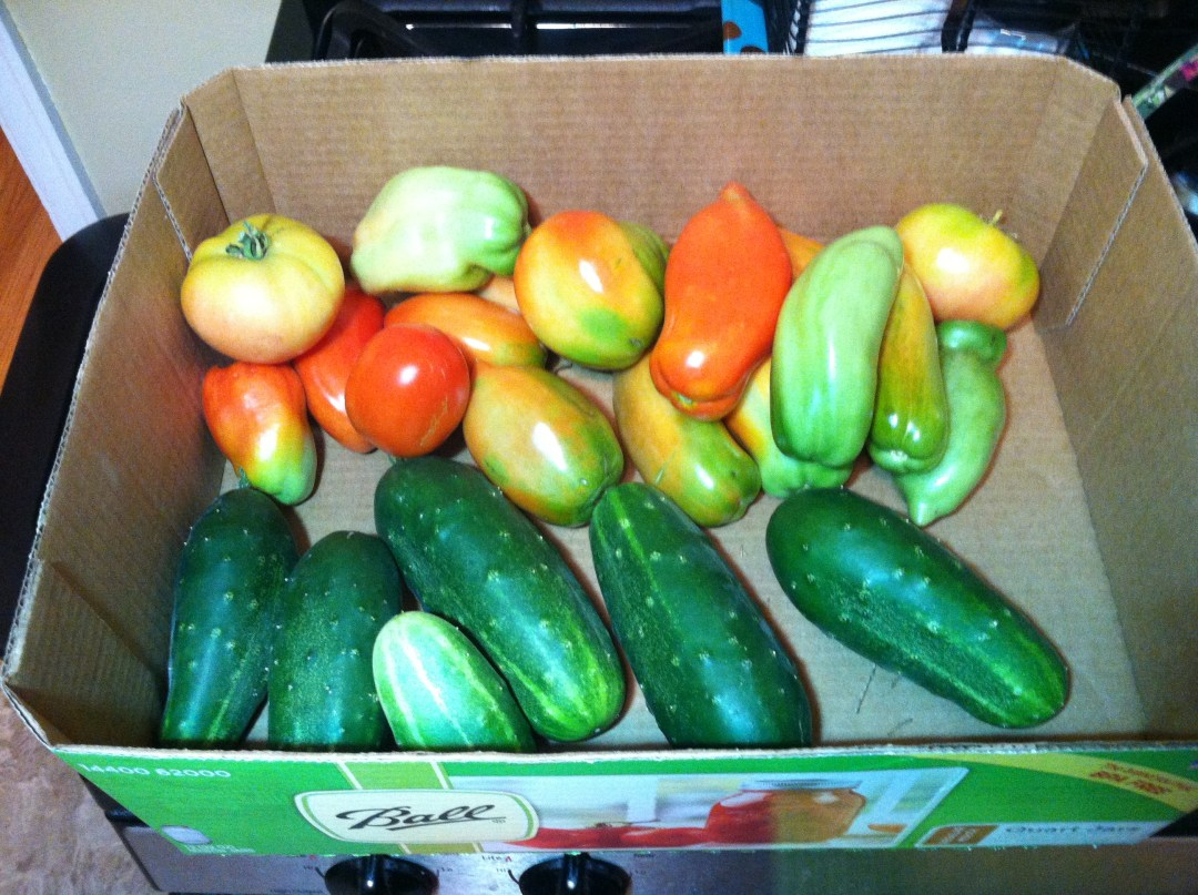 Grow what you eat: tomatoes and cucumbers