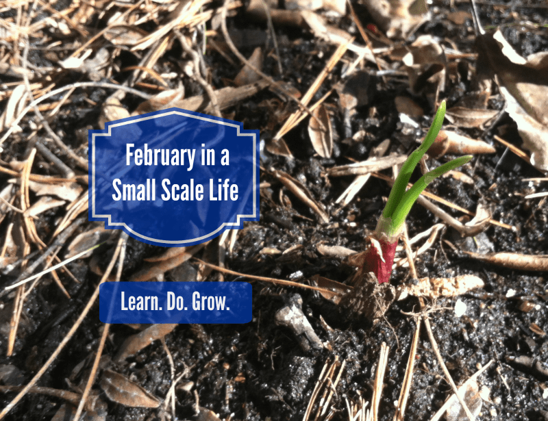 February in a Small Scale Life; garden; onion