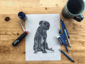 Dog; drawing; pencil sketch; art; creativity; Flavourful Farms; urban farms