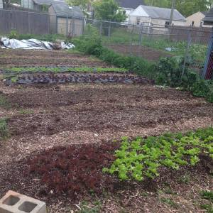 Drew's urban farm is located in his backyard in Columbus, Ohio; like me, he is a renter!